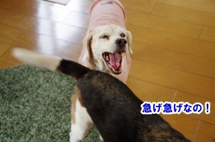 ふわあ 4