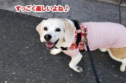 歩けば 2