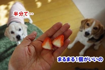 イチゴ 5