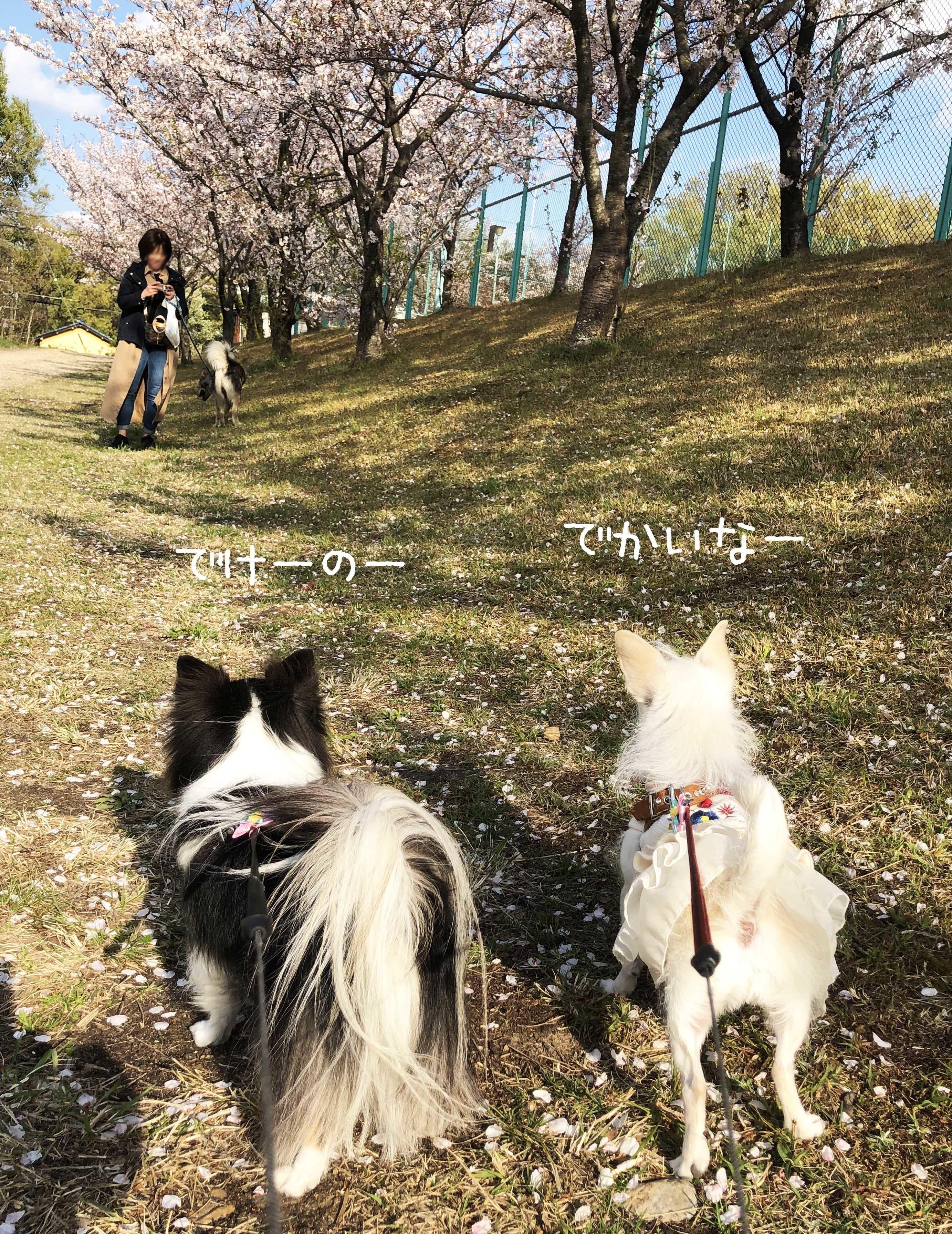 1904一緒に散歩02