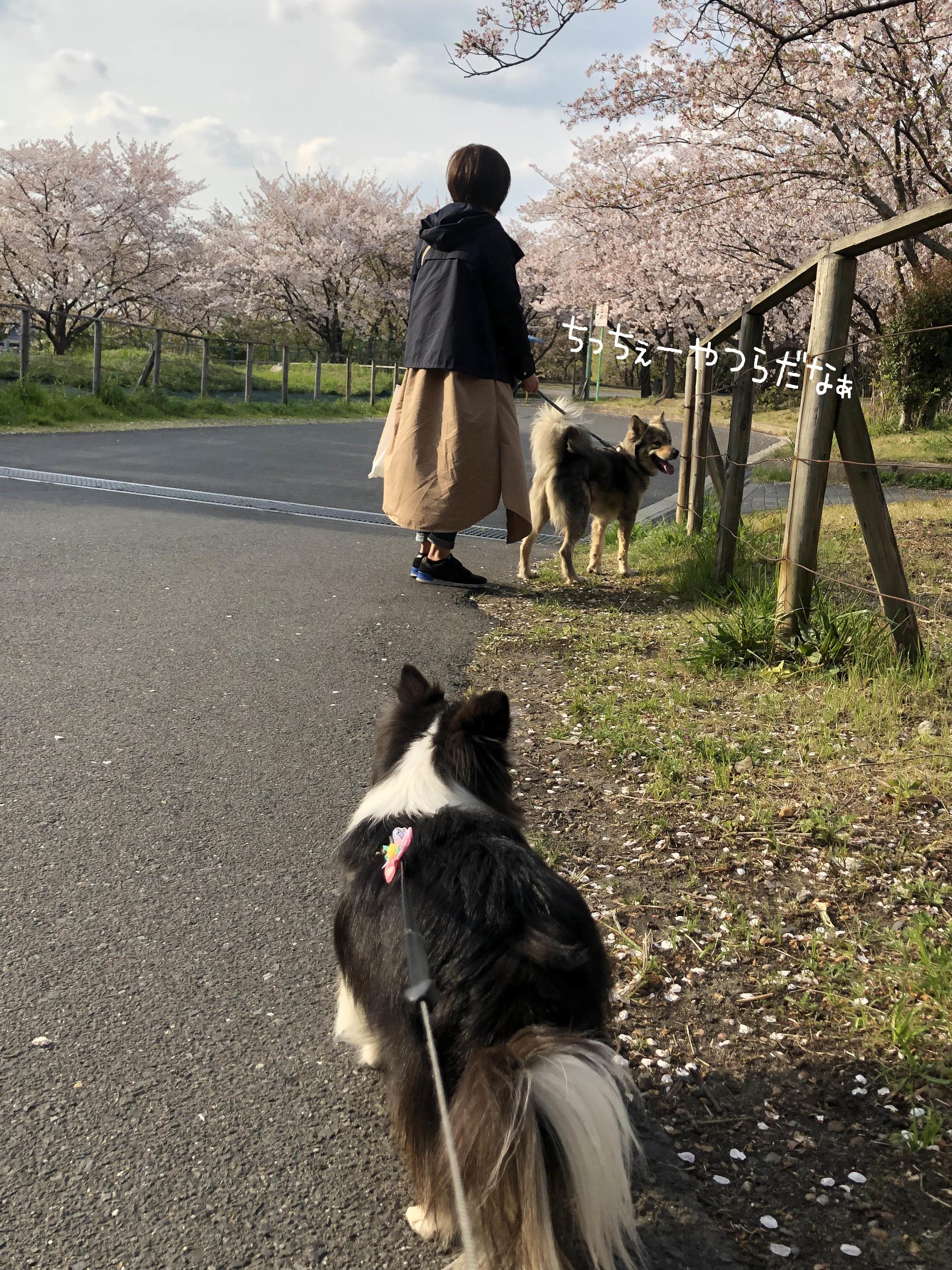 1904一緒に散歩03
