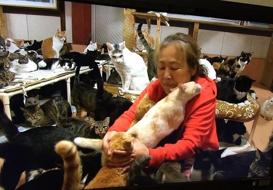 百合 ご 猫 隊 救援 犬 中谷 ブログ みなし NEWSの小山「犬猫みなしご」を訪ねた!中谷百合さんとは?