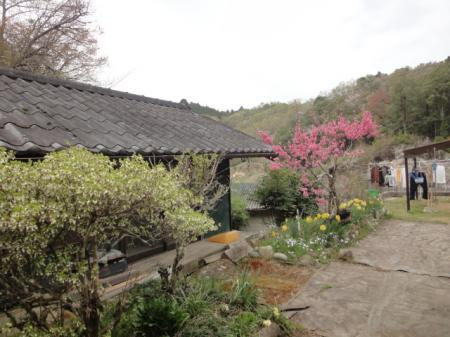 栗山家の春の庭