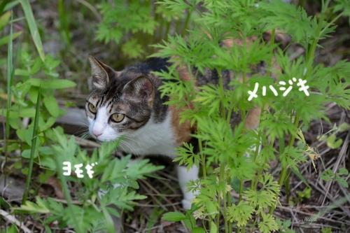 めはじきみけm032A5462