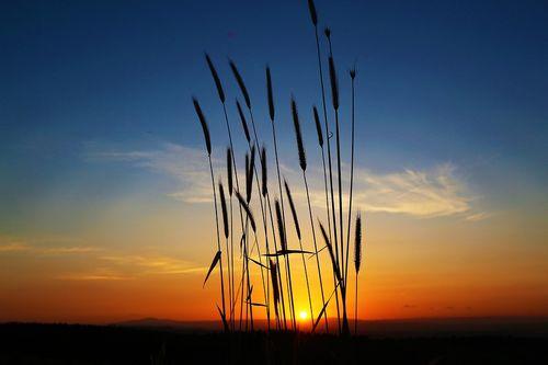 sunset-4274662_960_720.jpg