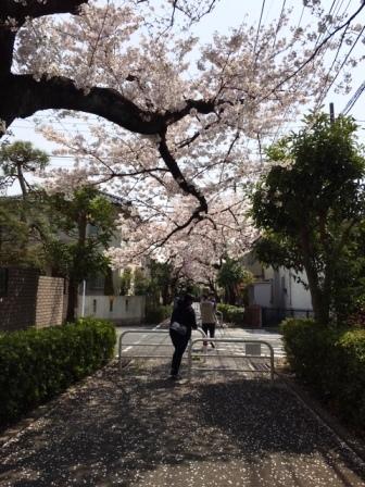 19sakuraO1_6272.jpg