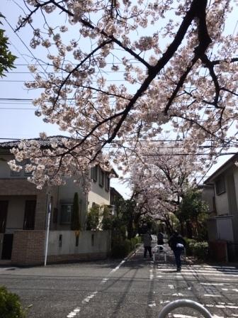 19sakuraO2_6273.jpg
