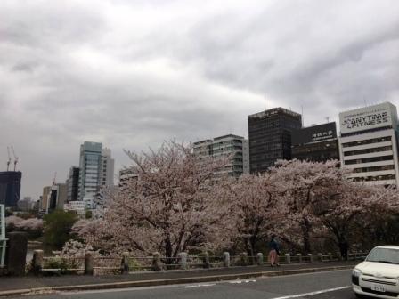 19sakuraichigaya1_6289.jpg