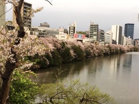 19sakuraichigaya_6288.jpg