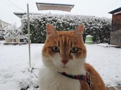 目覚めたら雪でした