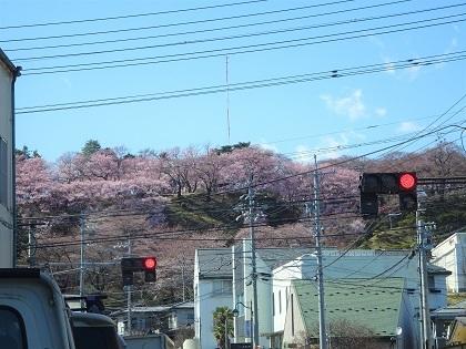 ピンクに染まる丘の上の公園
