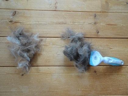 三毛姉妹の毛