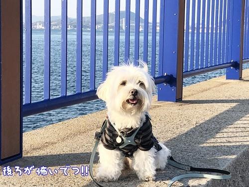 海辺散歩25