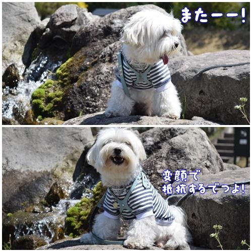 YGHOW2.jpg