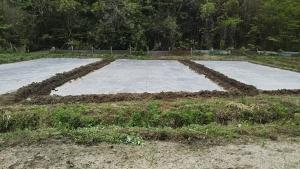 190429昨日養生処理トマト圃場