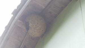 190517蜂の巣1