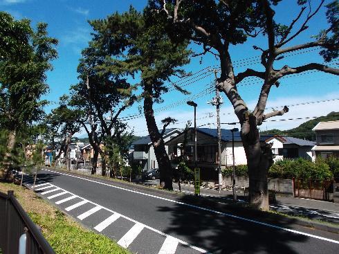小田原への道