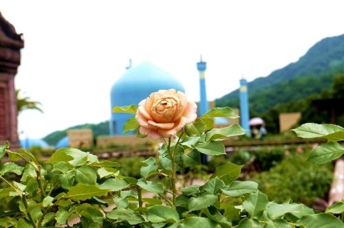 バラと風景
