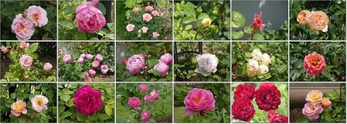 レオマ薔薇園
