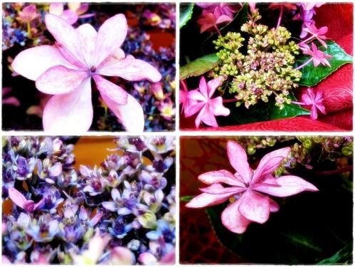 紫陽花もおわりです