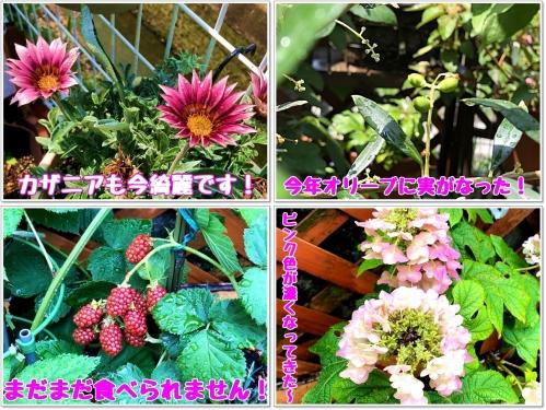 庭の花も楽しみ