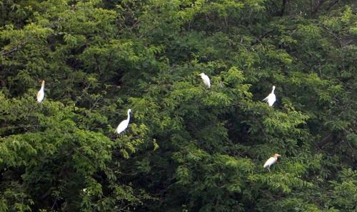 鷺の止まり木