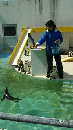 ペンギンショー