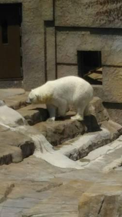 白クマ・ララ