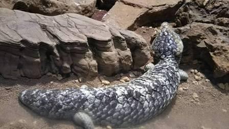 爬虫類館 (2)