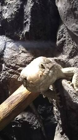 爬虫類館 (3)