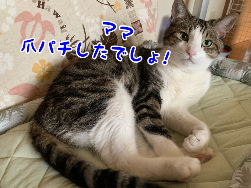 fc2blog_20190617002330c67.jpg