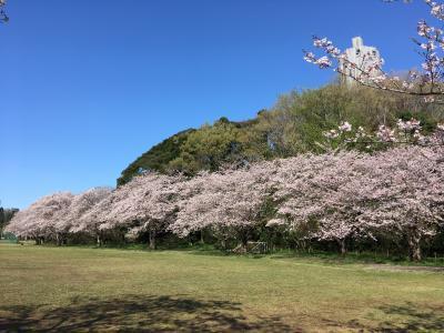 佐倉の公園