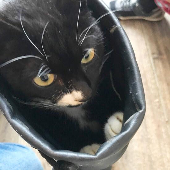 gata 猫