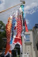 BL190502鯉のぼり3IMG_0960