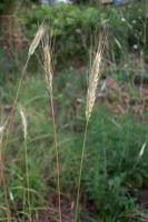 BL190606収穫5IMG_4302