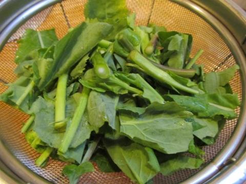 のらぼう菜1
