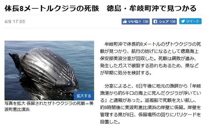 徳島沖 クジラ