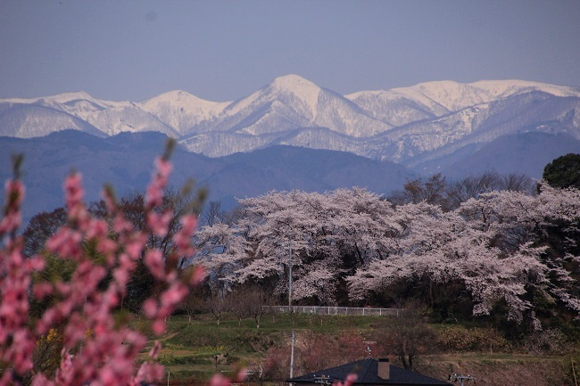 花見山 274 (1)