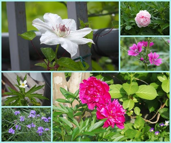 6月の花ー2