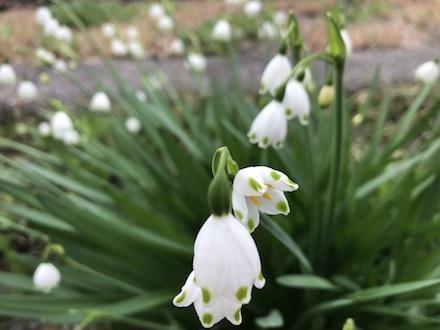 小田急線線路脇の花