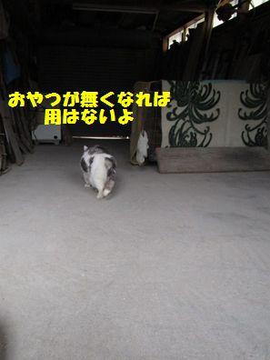 IMG_6342.jpg