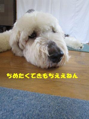 IMG_6384.jpg