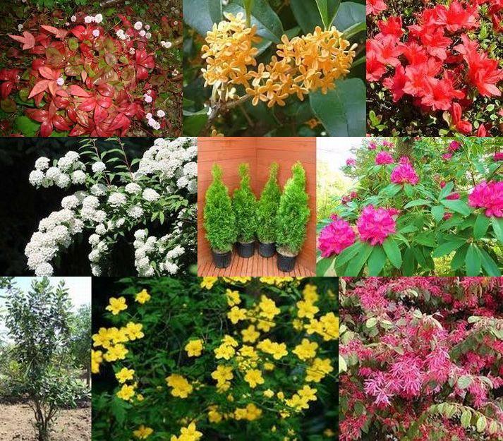 上段左から「おたふく南天」「キンモクセイ」「クルメツツジ」中段左から「コデマリ」「コニファー」「シャクナゲ」下段左から「フェイジョア」「ヤマイブキ」「紅花トキワマンサク」