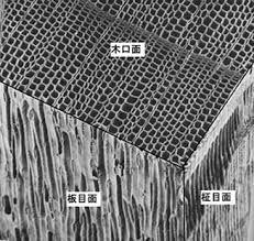 木の組織はハニカム構造になっています。