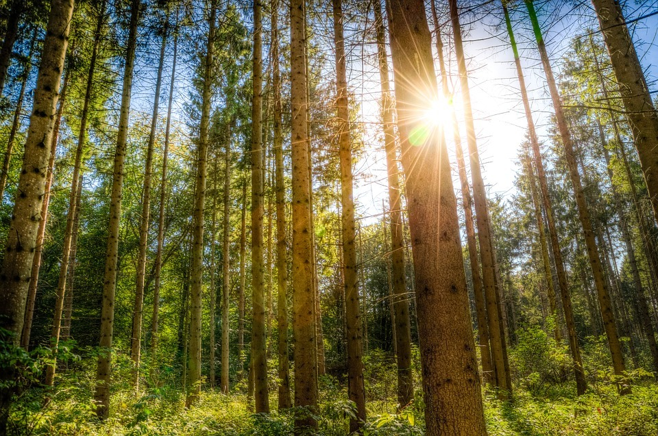 forest-1746282_960_720.jpg