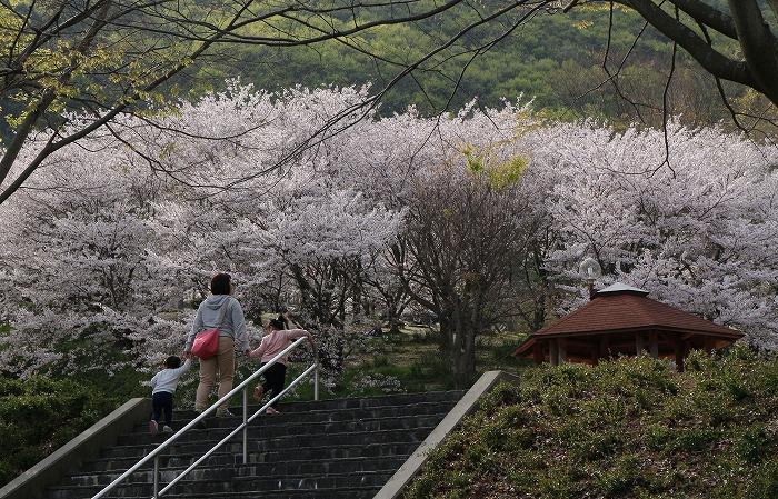 お花見親子 不動の滝 31 4 9