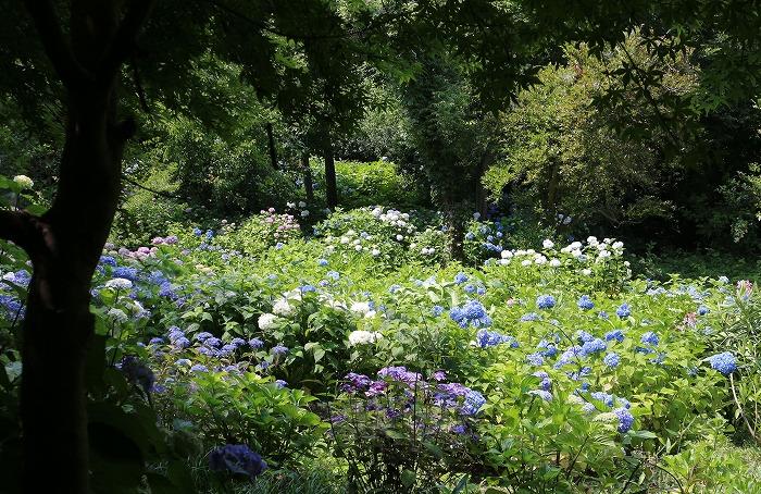 紫陽花園 志々島 1 6 11