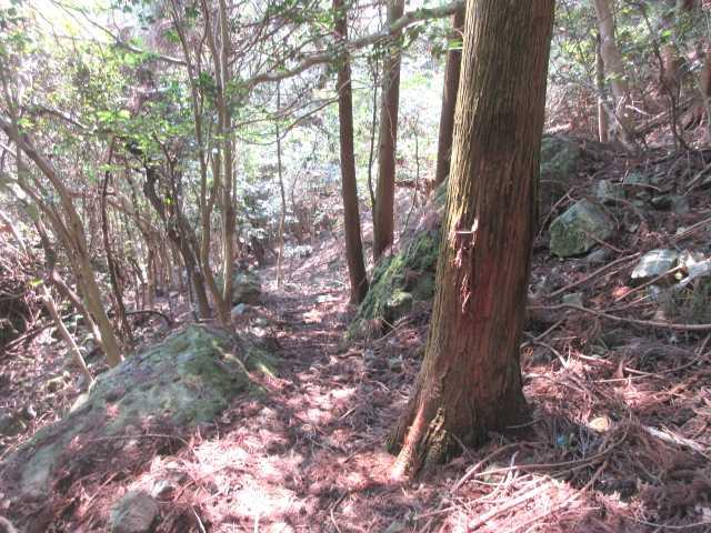 IMG0051JPGガレの谷を下る