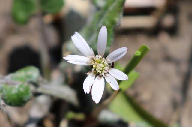 IMG0925JPG白い花