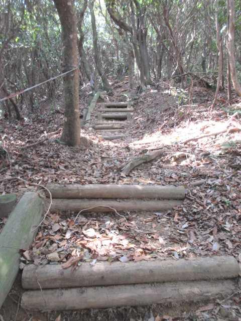 IMG0054JPG長い階段